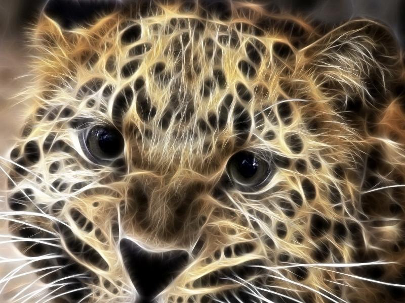 красивые картинки леопарды