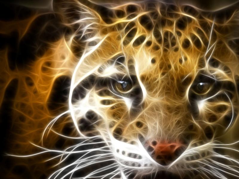 Взгляд леопарда. 15 фото
