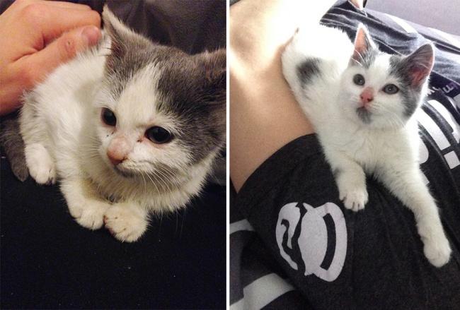12 домашних животных до и после того, как их забрали из приюта