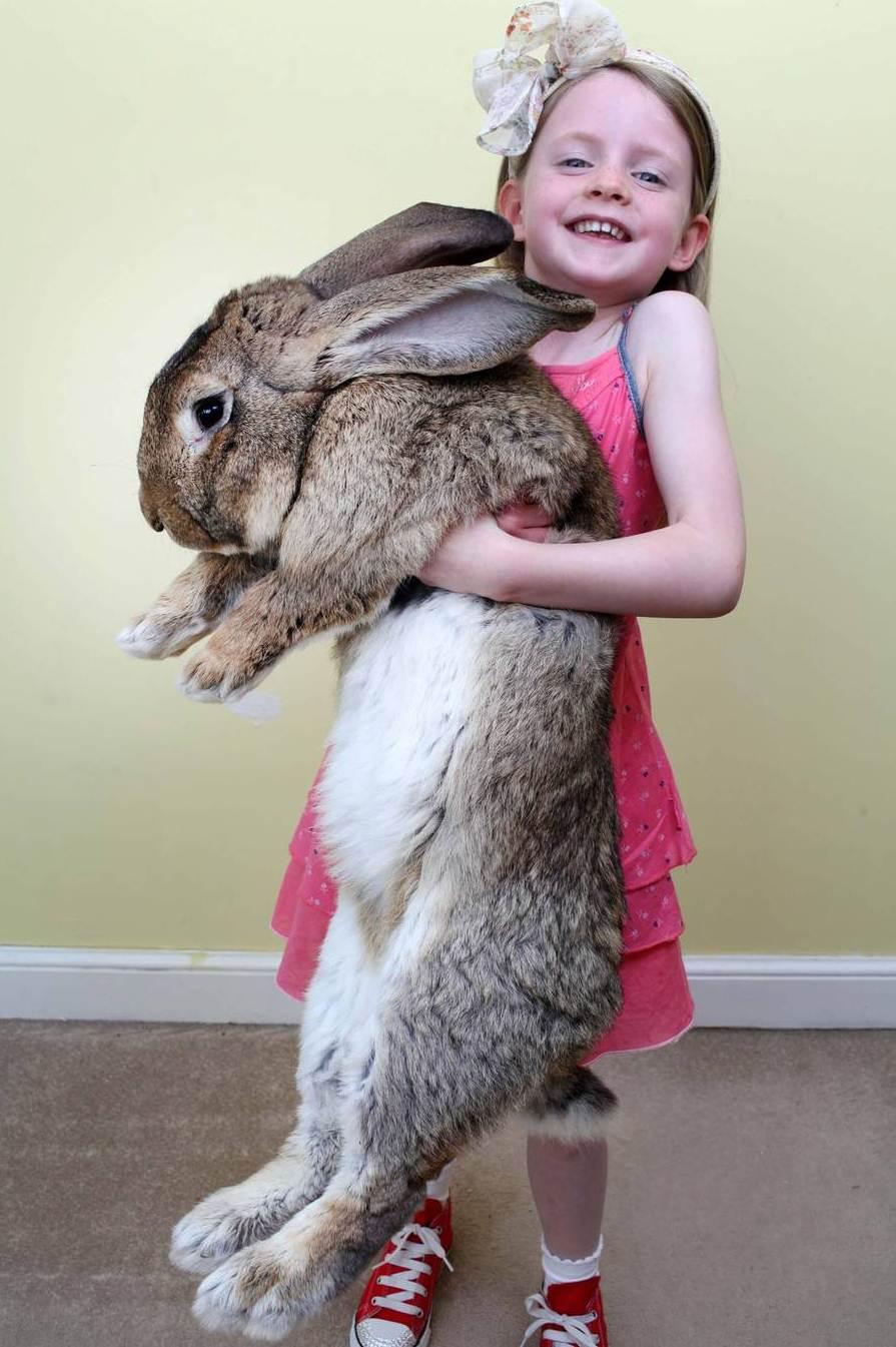Самый большой кролик в мире 14 фотография