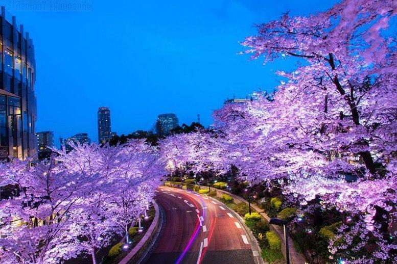 12 самых красивых фотографий Японии