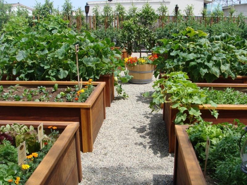 как устроить красивый сад