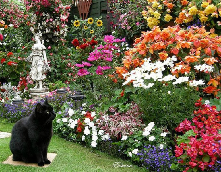 Красивые сады и цветники