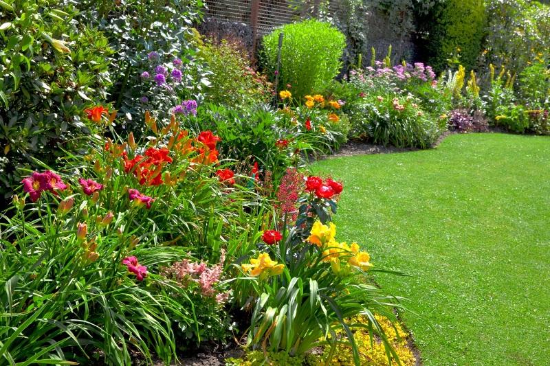Пионы с другими цветами на клумбе в саду фото