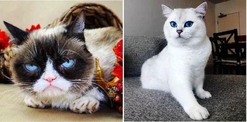Самые популярные коты в инстаграме