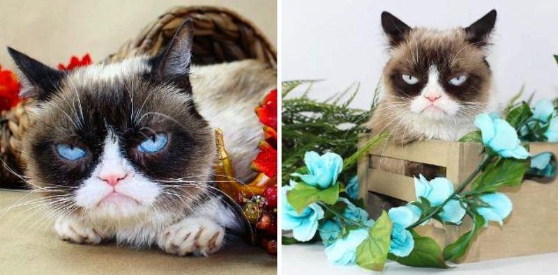 2012 год для кота