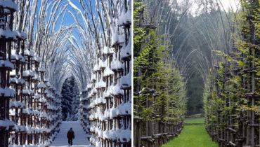 Растительный собор