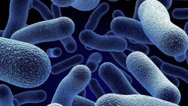 Факты о бактериях
