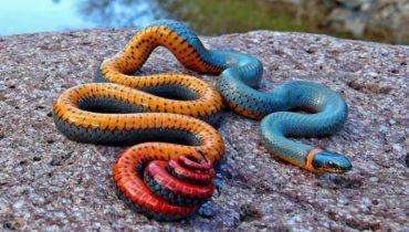 Необычная окраска животных