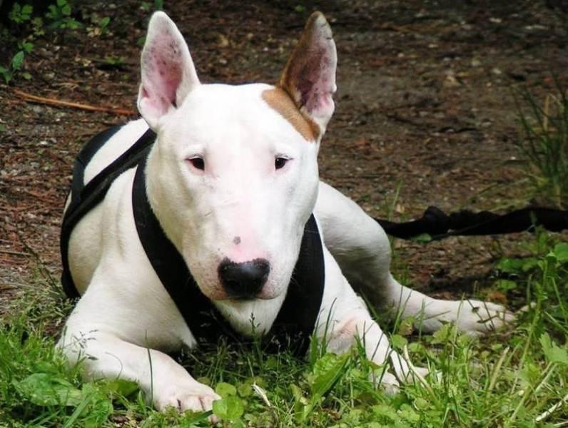 собака порода фото