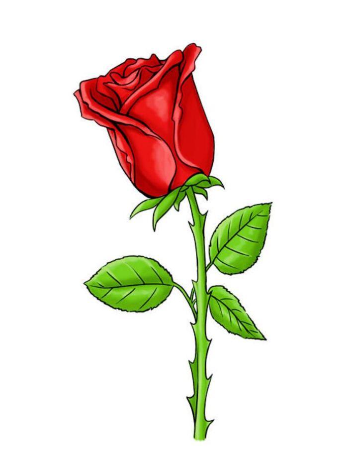 розы карандашом картинка
